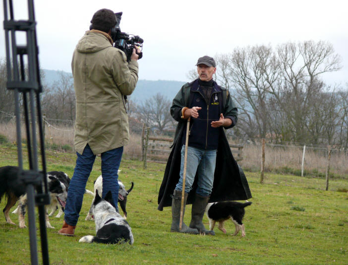 Border collie sur France3