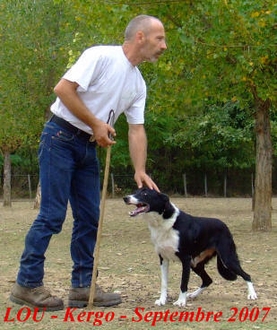 aveyron border collie
