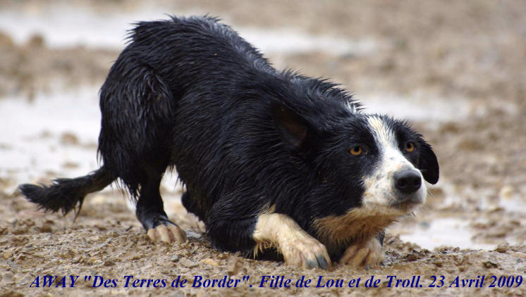 d�monstrations de border collie au travail avec Raoul Kergomard,d�partement de l'aude